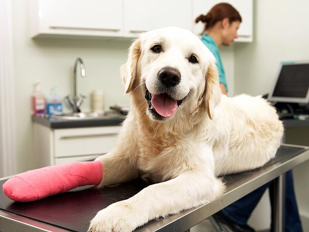 splint bandage