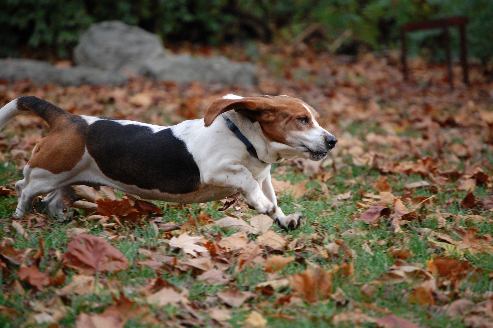 running-dog-1346224